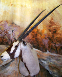 Gemsbok-Shoulder-Mount-