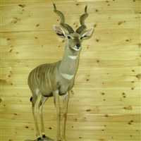 Lesser Kudu Full Mount
